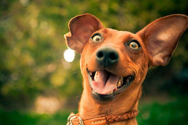 Cachorros podem herdar a personalidade de seus donos Background