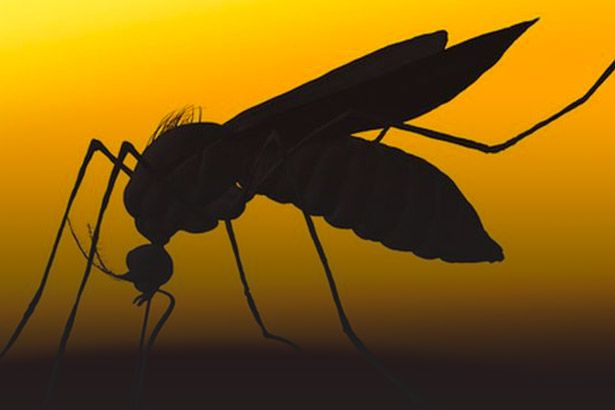 Pesquisadores descobrem nova metodologia para diagnóstico de Zika Background